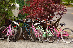 DSC07133.jpg (stef...o) Tags: rose voyage tofino couleur vancouverisland vert vlo transport canada 2roues britishcolumbia amrique amriquedunord america bc bicycle british coast color columbia green north northern pink travel verte west western ca