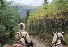 Healy AK ~ Covered Wagon trip - HBW! (karma (Karen)) Tags: healy alaska trails coveredwagons horses trees dof bokeh bokehwednesdays hbw topf25