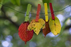 Les couleurs d'automne (Fall colors) (l'imagerie potique) Tags: limageriepotique poeticimagery fall automne autumn colors leaves bokeh happy