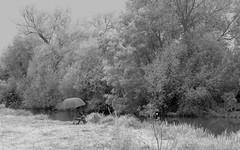 Fishing (Tony Tooth) Tags: nikon d7100 tamron 2470mm bw blackandwhite fishing fisherman mesopotamia cherwell rivercherwell river trees oxford