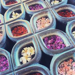 Eternal Balance (kevinmulya) Tags: bali flower nikon balance nikkor eternal d60