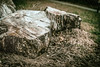 RD-177-326 Nothing Interesting Here (misterperturbed) Tags: stump treestump perturbedsanctum