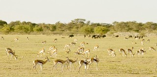 Botswana Hunting Safari 49