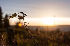 Aussichtspunkt1-1 (Pr3mium Fotografie) Tags: licht sonnenuntergang landschaft oppenau