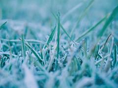 Frost #1 (_kaochan) Tags: lumix frost panasonic panasonicdmcgf1 lumixdmcgf1
