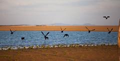 Velha Remanso - Lago de Sobradinho (Tovinho Regis) Tags: pordosol brazil brasil flickr bahia búzios riosãofrancisco remanso lagoseco tovinho lagodesobradinho tovinhorégis velharemanso