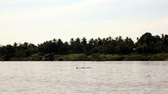Relaxen. Delfine gesehen.