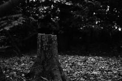 Boschi (Real Photo // Charleroi) Tags: foret arbre bois feuille xpro1 fujinon35mm fujixpro1