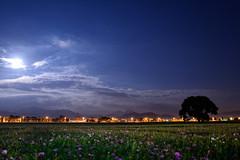 2014  Moon light flower in Taiwan Taichung .   DSC_6253 (Ming - chun ( very busy )) Tags: city travel light cloud moon house mountain flower building field night nikon 28mm taiwan luna moonrise moonlight taichung nikkor    d800    28mmf18    hsinshe                  nikon28mmf18   nikon28mm18   f1828mm