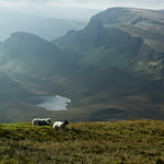 Sheep in Isle Of Skye thumbnail