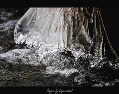 Frozen (begumidast) Tags: blue schnee autumn winter snow alps color ice nature water canon eos schweiz switzerland evening frozen is suisse outdoor natur glacier berge adventure clear usm traveling alpen svizzera gletscher fluss eis soe ef engadin morteratsch graubunden abenteuer ef70300mm eflens begumidast 5dmarkiii musictomyeyeslevel1 campingmorteratsch