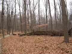 Mt. Airy Forest (elycefeliz) Tags: park ohio mt cincinnati airy