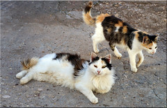 campground cats