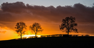 Three Trees at Sunset - #Explored