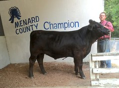 "Champion Steer 4H & Open • <a style=""font-size:0.8em;"" href=""http://www.flickr.com/photos/25423792@N05/16001689807/"" target=""_blank"">View on Flickr</a>"