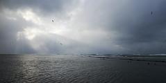 The Oga Peninsula (Jussi Salmiakkinen (JUNJI SUDA)) Tags: winter sea sky seascape japan landscape cloudy seagull wave shore   akita   japani oga  japansea   ogapeninsula   tohhoku northanjapan