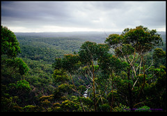 141231-7096-EOSM.jpg (hopeless128) Tags: trees australia bluemountains newsouthwales 2014 glenbrook