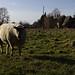 Brad on the pasture