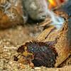 Nature Fire Photo Photography KSA Wood كشته مكشات حطب نار (Instagram x3abr twitter x3abrr) Tags: wood nature fire photography photo كشته نار ksa حطب مكشات