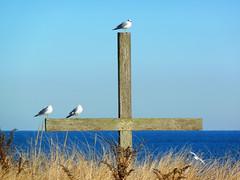 Cross Roads (foregorp) Tags: ocean seagulls beach water birds reeds cross asburypark shore jerseyshore challengegamewinner