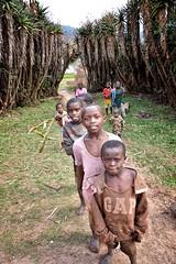 Roadside, Uganda (Rod Waddington) Tags: africa road boys group uganda roadside aloes
