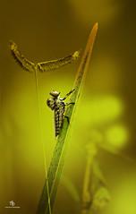 Macro!! (Anup Devaraj Clicks) Tags: macro nature nikon naturephotography macrophotography nikkond3200