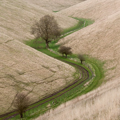 Horse Dale (matrobinsonphoto) Tags: york trees horse tree nature grass rural way square landscape outdoors countryside chalk long dale path yorkshire hill north telephoto pasture valley crop wolds huggate horsedale