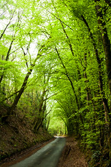 Spring Greens (Elliot Tratt) Tags: road trees summer portrait tree green nature digital canon landscape eos spring mud natural greens roads muddy 2016 400d