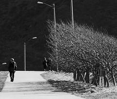 Windy landscape (annechr) Tags: trees bw landscape sh godya
