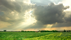 Revival.. (Ext-Or) Tags: trees light sky sun plant nature grass yellow clouds landscape flickr outdoor serenity fields rays sunrays grassland lightrays revival dramaticclouds thrace flickrturkey nikonturkey nikond5200