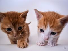 Kittens (Aida Gonzlez Solano) Tags: cats animals cat nice kitty kittens kitties lovely