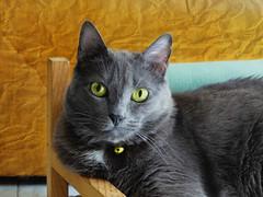 Relax!! (anton) Tags: mussy relax riposo divanetto we sassari rest sofa kitty