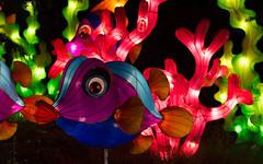 _DSC9749_2 (Elii D.) Tags: light fish flower animal night zoo monkey neon dragons lantern lampion dargon