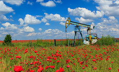 Oil and gas well in rural countryside with poppy field (otoxunghe) Tags: old sunset sky sun green industry ecology weather clouds fossil energy colorful warm power natural diesel dusk decay destruction politics engine dramatic gas well machinery health pollution rig romania future poppy oil change environment gasoline sands emissions protection climate fuel resource tar remediation global renewable extraction drilling shale fracking hydrofrack