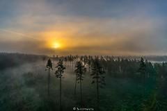 Jaanilaupeva algus (BlizzardFoto) Tags: morning fog forest sunrise beginning mets aerialphotography hommik udu stjohnseve algus aerofoto pikesetus jaanilaupev