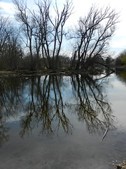Reflections on the Speed River in Guelph (elma2010 14k photos, 400k views) Tags: trees reflections river guelph