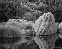 At Sabino Canyon (claudiov958) Tags: arizona blackandwhite bw blancoynegro film tucson ngc rodinal ilford pretoebranco biancoenero sabinocanyon hp5plus selfdeveloped pentax67ii pentaxart photoka plustekopticfilm120 claudiovaldes takumar6x7105mm124