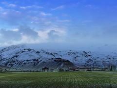 I still miss Iceland - Some rare green in winter, must be the thermal heat near the south coast that kept them alive (PsJeremy) Tags: winter snow green ice frozen iceland