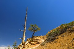 Poor lonesome tree #4 (Isabelle Gallay) Tags: trees usa tree nature america landscape landscapes utah fuji canyon arbres fujifilm brycecanyon paysage amrique etatsunis fujix30