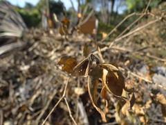 DSC04730 (familiapratta) Tags: nature insect iso100 sony natureza insects inseto insetos hx100v dschx100v