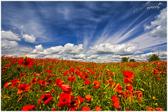Beautiful South Downs Poppies (Sharon Dow Photography) Tags: uk blue red wild england flower nature beautiful field weather clouds downs sussex petals flora nikon brighton pretty britain south ngc dramatic bluesky hills poppy poppies stunning wildflowers blueskies remembrance opium eastsussex naturalworld cloudporn southdowns ditchling southernengland papaveraceae southeastengland wideanglelens 2016 ditchlingroad papaverrhoeas poppyfield awesomesky d7100 summer2016 nikond7100 sharondowphotography summersday june2016