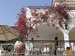 Nearby hotel (Wider World) Tags: greece cephalonia kephalonia kefalonia bougainvillea hotel arch urn railings wroughtiron bract