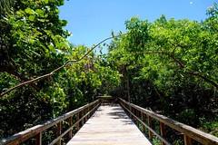 Beach Walk Boardwalk Trail Nature Vegetation in Florida Clear Sky Bluesky (Luvbucs2&@yahoo) Tags: beachwalk boardwalk trail nature vegetation florida clearsky bluesky