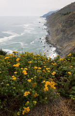 Kindness is the language which the deaf can hear and the blind can see... (ferpectshotz) Tags: raggedpoint bigsur pacificocean pacificcoasthighway wildflowers ocean coast