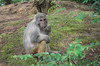 Memory  Pantaxk30 (JohnsonCheung1995) Tags: animal monkey green 猴子 旅游