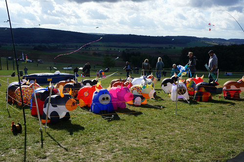 Ground Shot at The World of the Celts Showing a Pen of  Inflatable Kite Cows