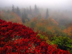 Cataract Sunrise (Bill Fultz) Tags: autumn red cliff fall fog fallcolors westvirginia dollysods alleghenymountains monongahelanationalforest blueberrybushes bearrocks dollysodswildernessarea bearrocksnaturepreserve