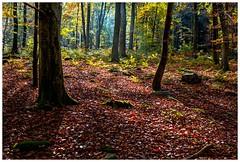 5D-3540-Auto (ac | photo) Tags: autumn trees light fall nature colors leaves landscape fallcolors