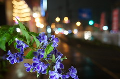 rainy night (kana hata) Tags: street light flower color reflection rain night bokeh yokohama