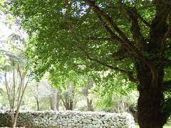 Light and Shadow (KiwiCharlotte - Insta charli_kalaki) Tags: trees light shadow newzealand summer green beautiful nice pretty auckland picturesque rockwall